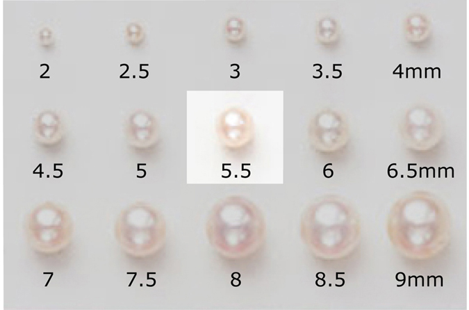 Loose Pearl by The Princesse Pearl Collection